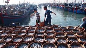 Xây dựng hệ thống thông tin nghề cá đồng bộ theo định hướng phát triển bền vững ngành thủy sản