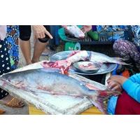 Cá Thiều tươi sống